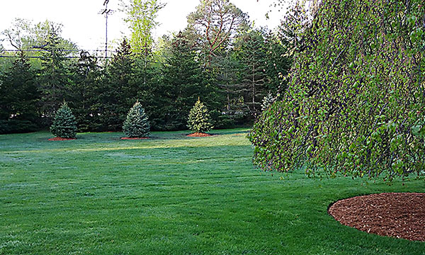 landscapes - lawn and landscaping maintenance
